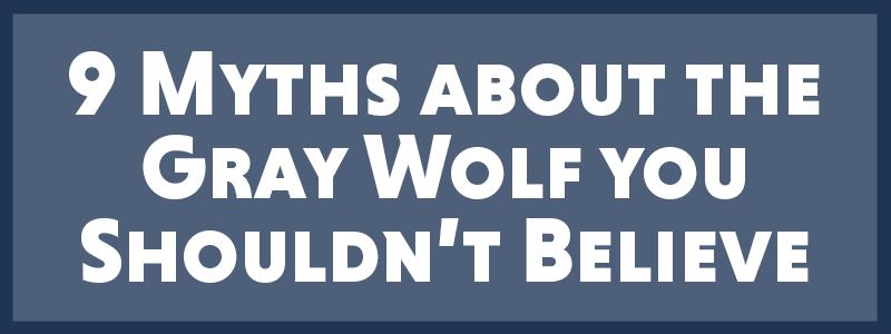 9 Myths Blog-1